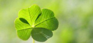 7 regalos para desear buena suerte en una mudanza